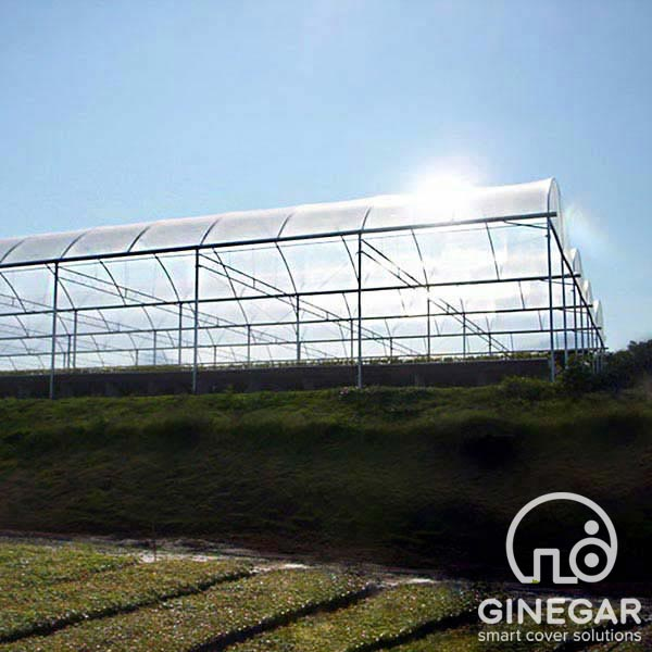 Suncover Clear